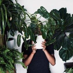 Vypěstujte si vlastní džungli v pokoji aneb proč a jak začít s pokojovkami